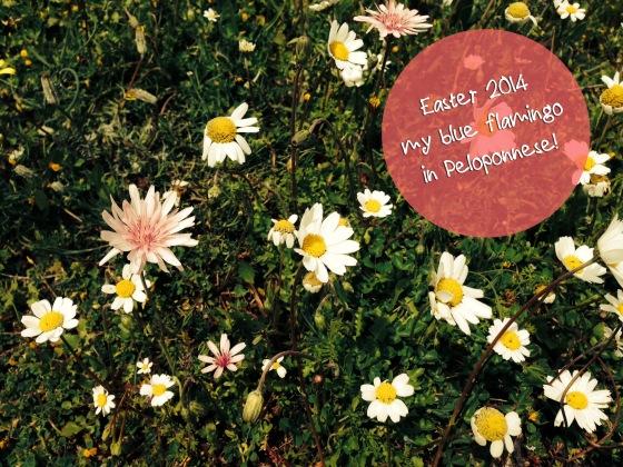 daisies-myblueflamingo
