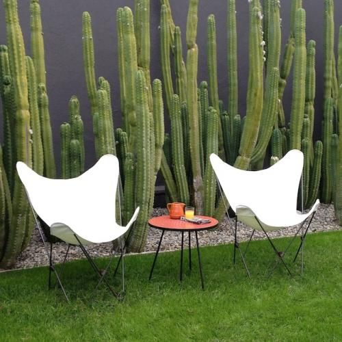 Cacti and butterfly chairs