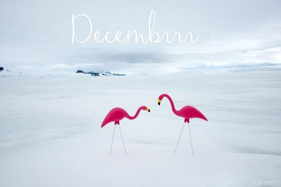 decembrr flamingo