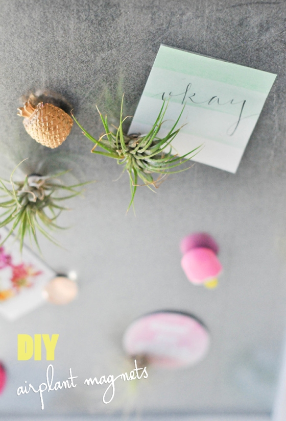 airplant magnets