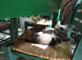 Kittens having their siesta