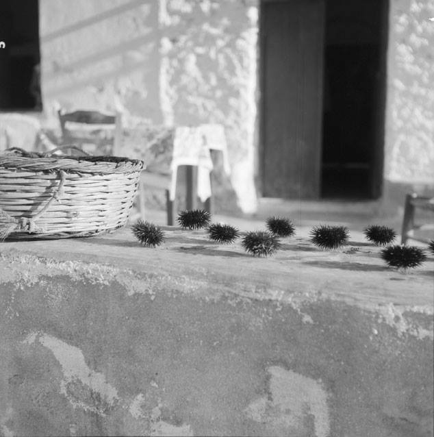 Urchins waiting to be eaten. Paros, Greece 1958. Photo by Zaharias Stellas