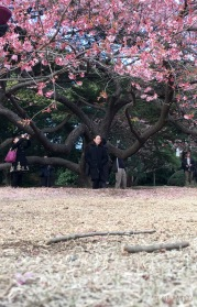 Sakura woman_mbf