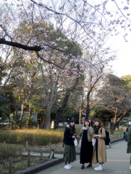 sakura and girls at Ueno park