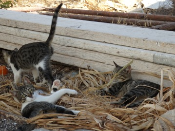 One of our discoveries there: playfull, cute cats!