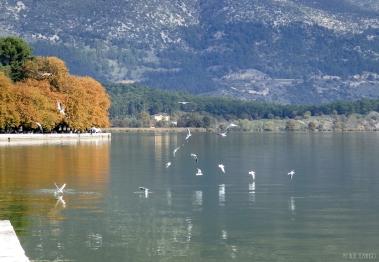 seagulls at the lake