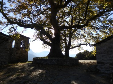 The imposing plane tree at Small Papigko village