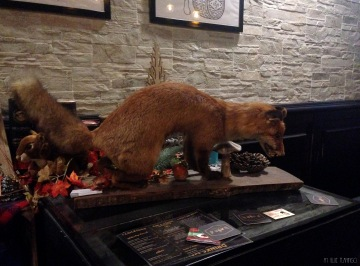 a fox at the Hopscotch Pub